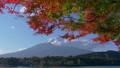 Autumn leaves and Mt. Fuji seen from Lake Kawaguchi 50755067