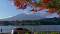 Autumn leaves and Mt. Fuji seen from Lake Kawaguchi (tilt down) 50755069