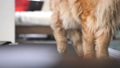 Paws of a cat, running on the treadmill. slow motion. 3840x2160, FullHD 50758490