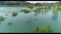 白川湖の水没林 空撮 山形飯豊 50762763