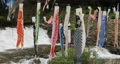 宮城県白石市の材木岩公園で鯉のぼりを空撮しました (無風) 50808186