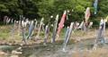 宮城県白石市の材木岩公園で鯉のぼりを空撮しました (無風) 50808190