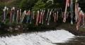 宮城県白石市の材木岩公園で鯉のぼりを空撮しました (無風) 50808218