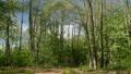 Springtime forest landscape 51055667