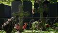 Iron crosses on graves 51055677