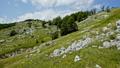 Stones on grassy hillside - Mount Durmitor, Montenegro 51064033