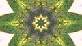 Abstract animated kaleidoscope motion background. 51343619