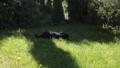 a black dog on a beautiful green lawn bites a bone 51353285