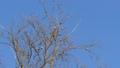 Flock of birds on a tree. 51943174