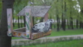 The pigeon sits on a broken bird feeder in the park. Bird in the feeder outdoors. 52209070