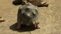 走水牛龟,乌龟,马达加斯加蜂鸟 52395773