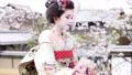 舞妓 舞妓さん 女性の動画 52402042