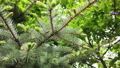 tree branches in the forest. camera movement 52545343