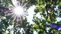 里山と木洩れ日 52963067