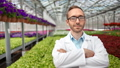 Medium shot portrait of smiling confident male science farmer posing in greenhouse looking at camera 52983698