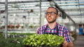Happy male farmer working in greenhouse walking with box full of organic seedling plants 52983716