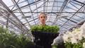 Female farmer walking with seedling box in glass modern greenhouse medium shot low angle 52983729