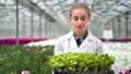 Happy female biology scientist bringing box organic seedling working in greenhouse medium close-up 52983732