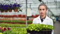 Female agricultural engineer walking with box full of seedling in greenhouse medium close-up 52983735
