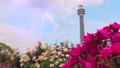山下公園薔薇フェスティバル 52999568