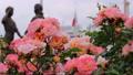 山下公園薔薇フェスティバル 52999571