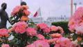 山下公園薔薇フェスティバル 52999572