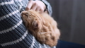 Cute ginger cat dozing on woman arms. Woman in grey sweater stroking her fluffy pet. Cozy home. 53127988