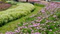 정원, 마당, 뜰 53140729