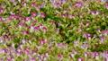정원, 마당, 뜰 53140734