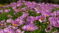 정원, 마당, 뜰 53140737