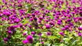 정원, 마당, 뜰 53140740