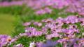 정원, 마당, 뜰 53140743