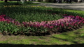 Beautiful flowerbed with flowers in the city park. 53144598