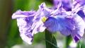 꽃 창포 피는 53146041
