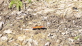 Bright small butterfly in moving on the ground in the nature forest, insects concept. Media 53188474