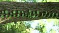新緑の里山 53220572