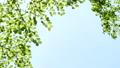 エコロジーイメージ フレーム バックグラウンド 53324528