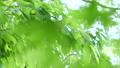 エコロジーイメージ 53324532