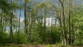 Beautiful spring forest landscape 53543166