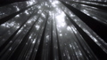 Cypress Tree Crowns with Sun Shining Through Misty Forest in Alishan Scenic Area, Taiwan 53619207