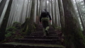 Young Caucasian Male Foreign Tourist Visit Alishan Scenic Area Walking Through Forest with Mist 53619209