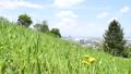 緑の丘と住宅地 53627474