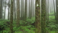 Misty Cypress Forest in Alishan Scenic Area with Fog and Haze in Taiwan 53636422