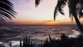 Branches of palm trees and tropical plants in the wind at sunset. Beautiful summer loop background. 53647137