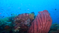 Flock of fish and small fish in the sea of Raja Ampat, Indonesia 53766203