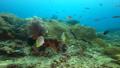 インドネシア・ラジャアンパットの海 クラカケチョウチョウウオ 53766227