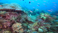 A group of small fishes and sea bream in Raja Ampat, Indonesia 53766231