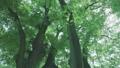 日光が差し込む瑞々しい新緑の木 53816144