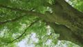 日光が差し込む瑞々しい新緑の木 53816146