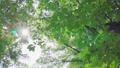 日光が差し込む瑞々しい新緑の木 53816147
